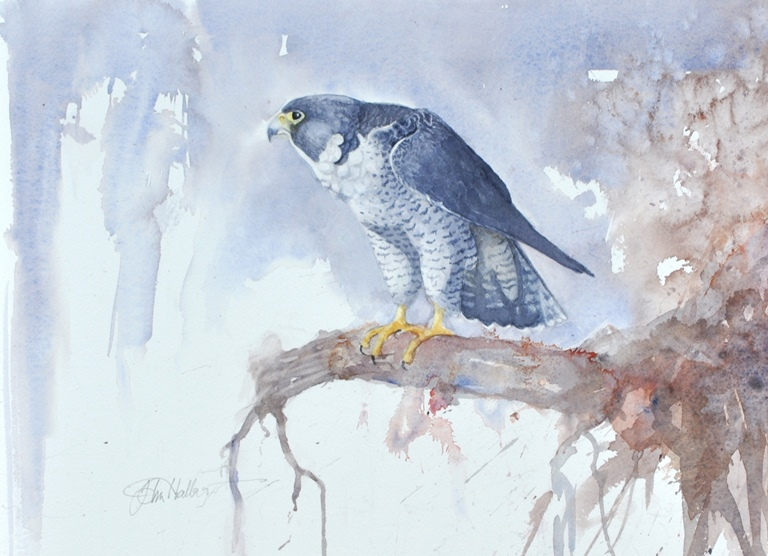 winter peregrine 2 001